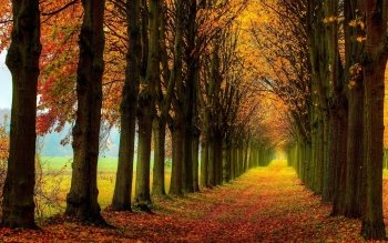Earth - Autumn Wallpapers and Backgrounds ID : 534637