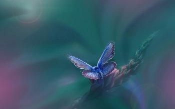 Animal - Butterfly Wallpapers and Backgrounds ID : 535424