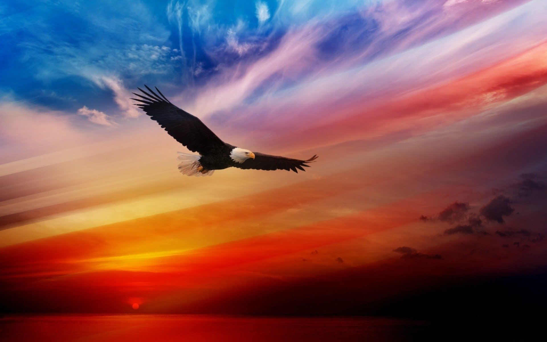 Animal - Eagle  Flight Sunset Wallpaper
