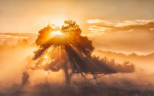 Earth Sunbeam Sunset Tree HD Wallpaper   Background Image