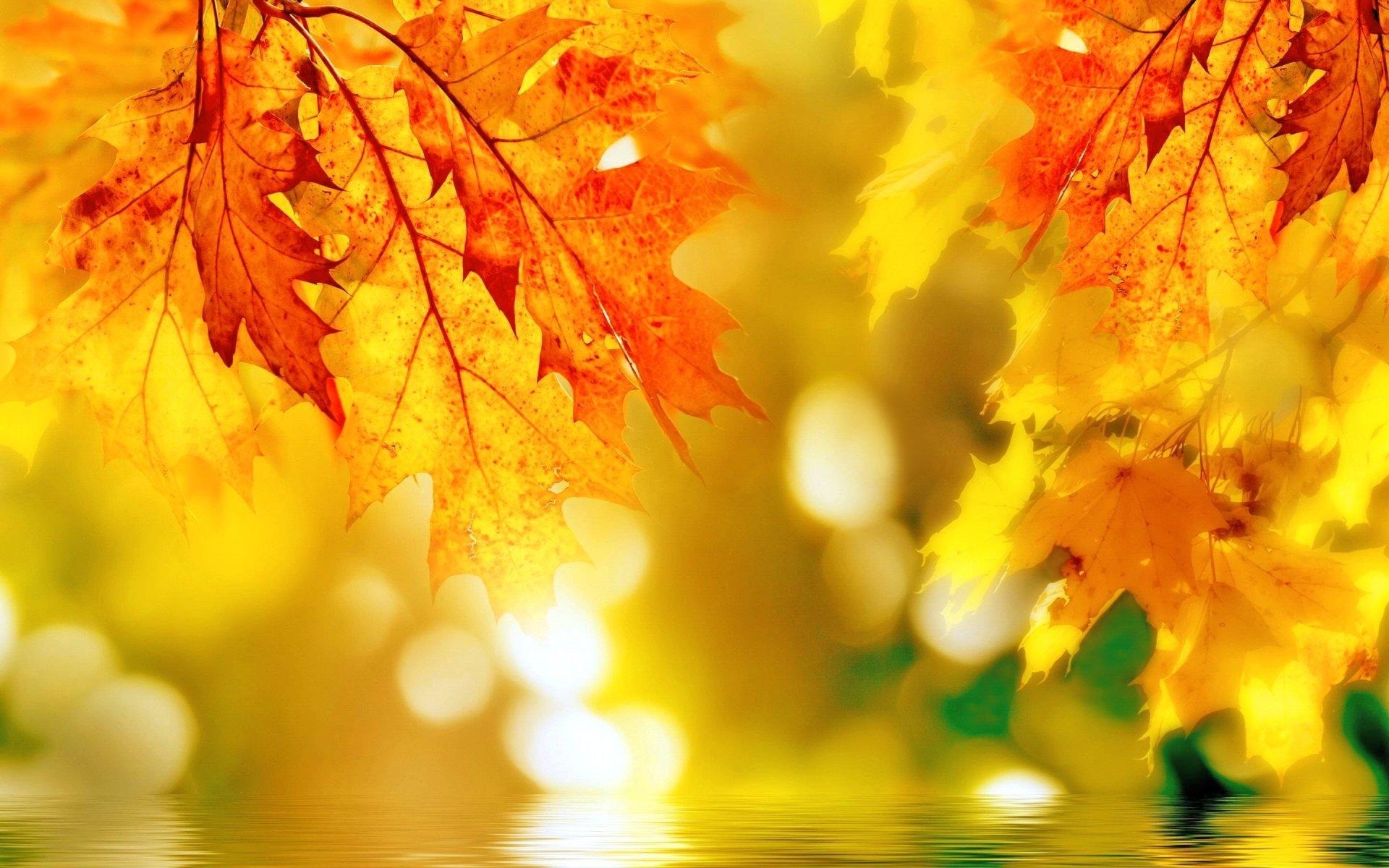 Earth - Fall  Leaf Nature Bokeh Colorful Wallpaper