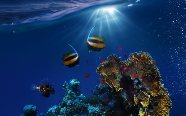 Animal Fish Fishes Coral Reef Sunbeam Underwater HD Wallpaper   Background Image