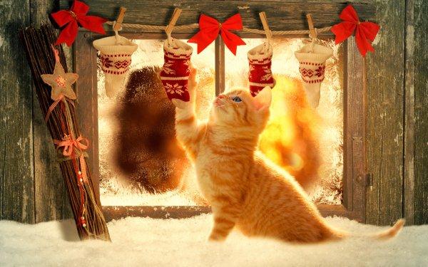 Holiday Christmas Window Christmas Ornaments Cat Decoration orange Wood HD Wallpaper | Background Image