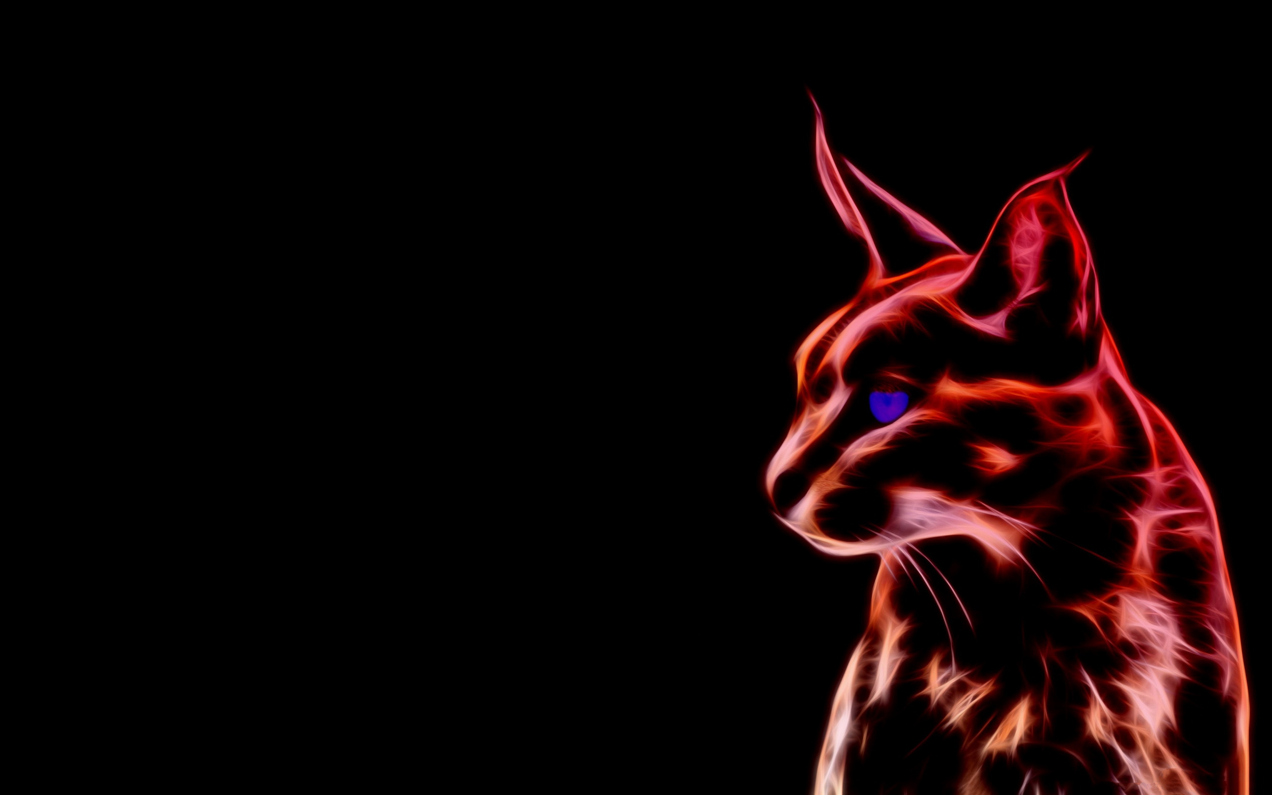 Caracal HD Wallpaper  Background Image  2560x1600  ID:565665  Wallpaper Abyss