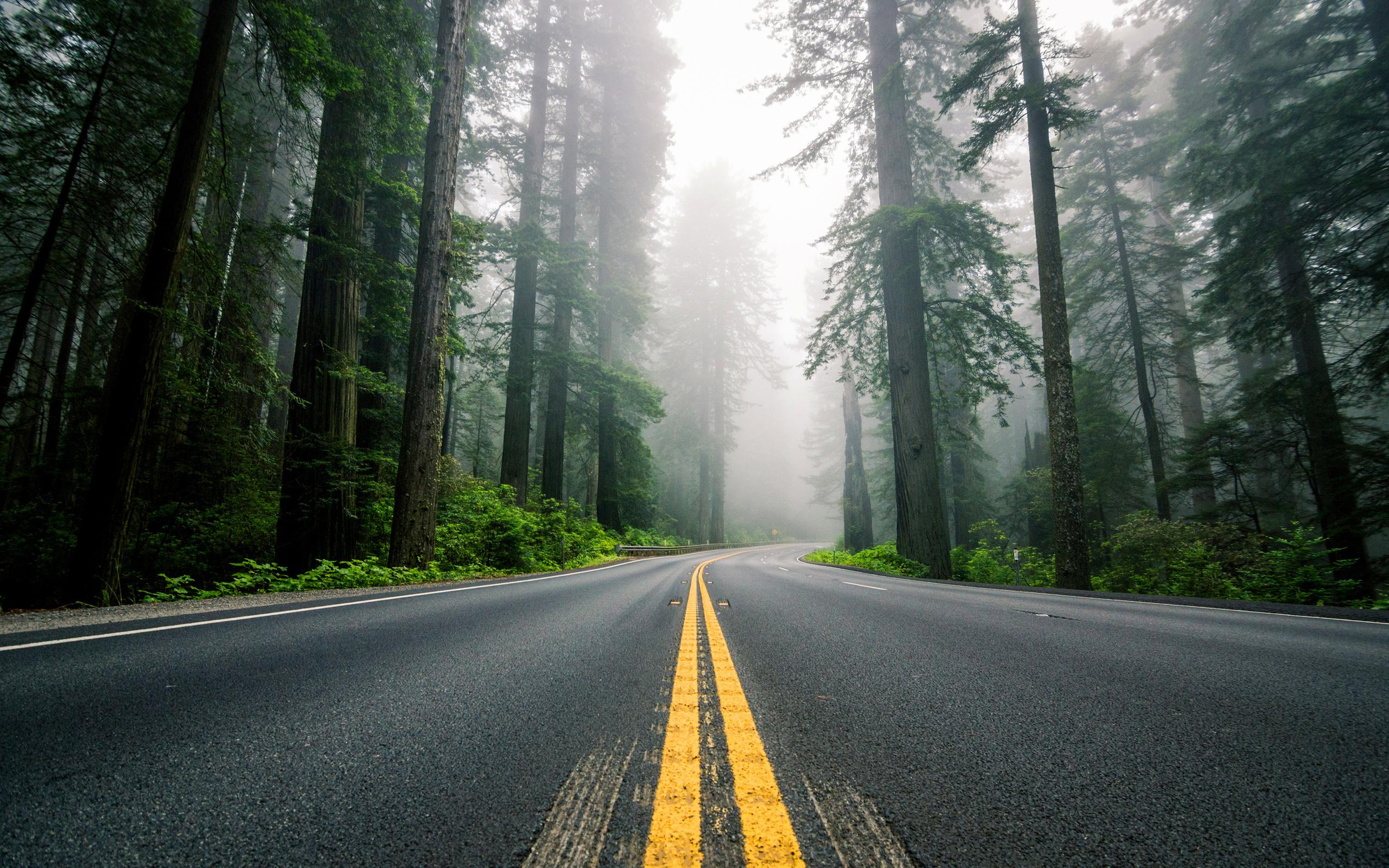 Road HD Wallpaper | Background Image | 2560x1600 | ID ...