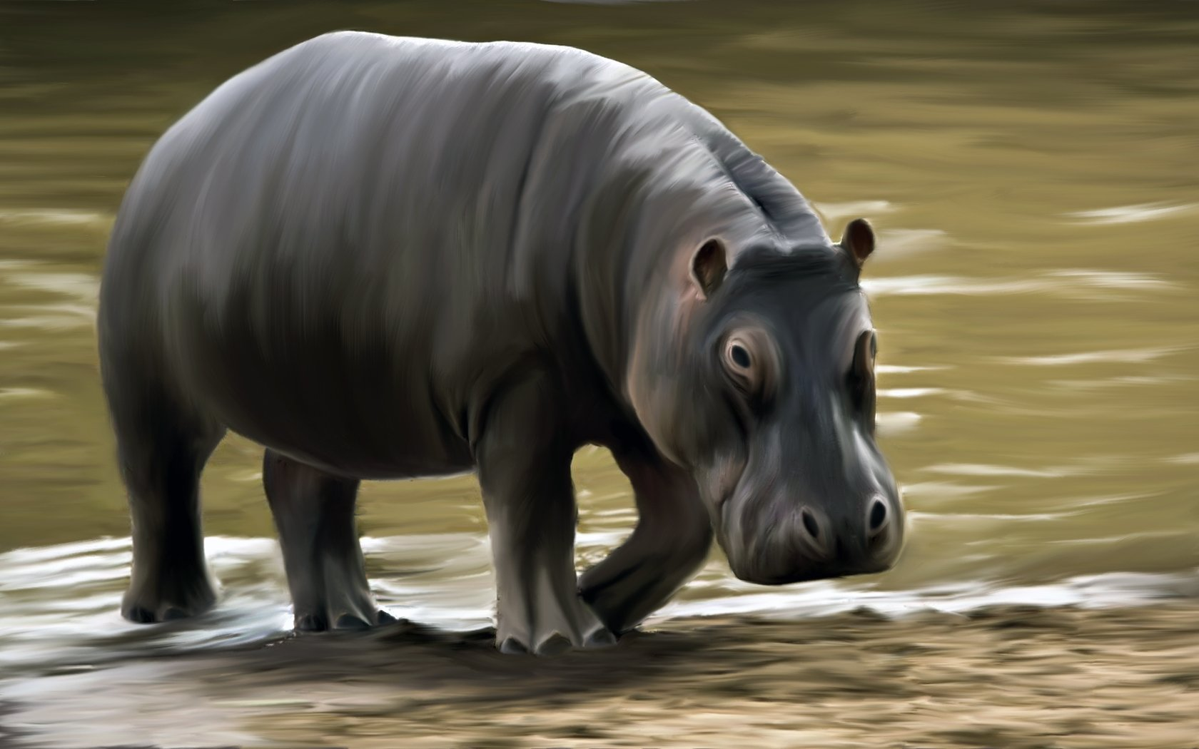 animal hippo wallpaper 1600x1200 - photo #30
