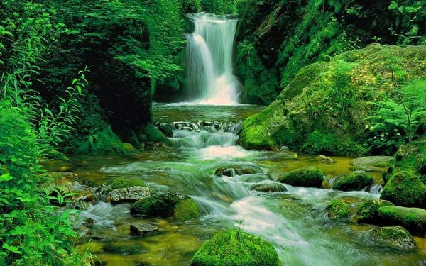 Earth Waterfall Waterfalls Green Forest Nature HD Wallpaper | Background Image