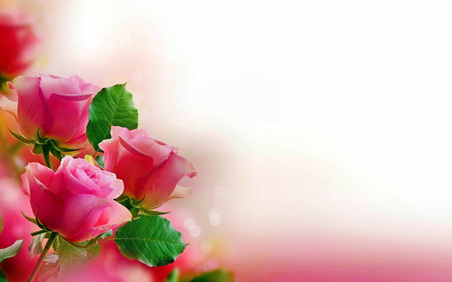 Earth - Rose  Valentine's Day Pink Rose Pastel Flower Wallpaper