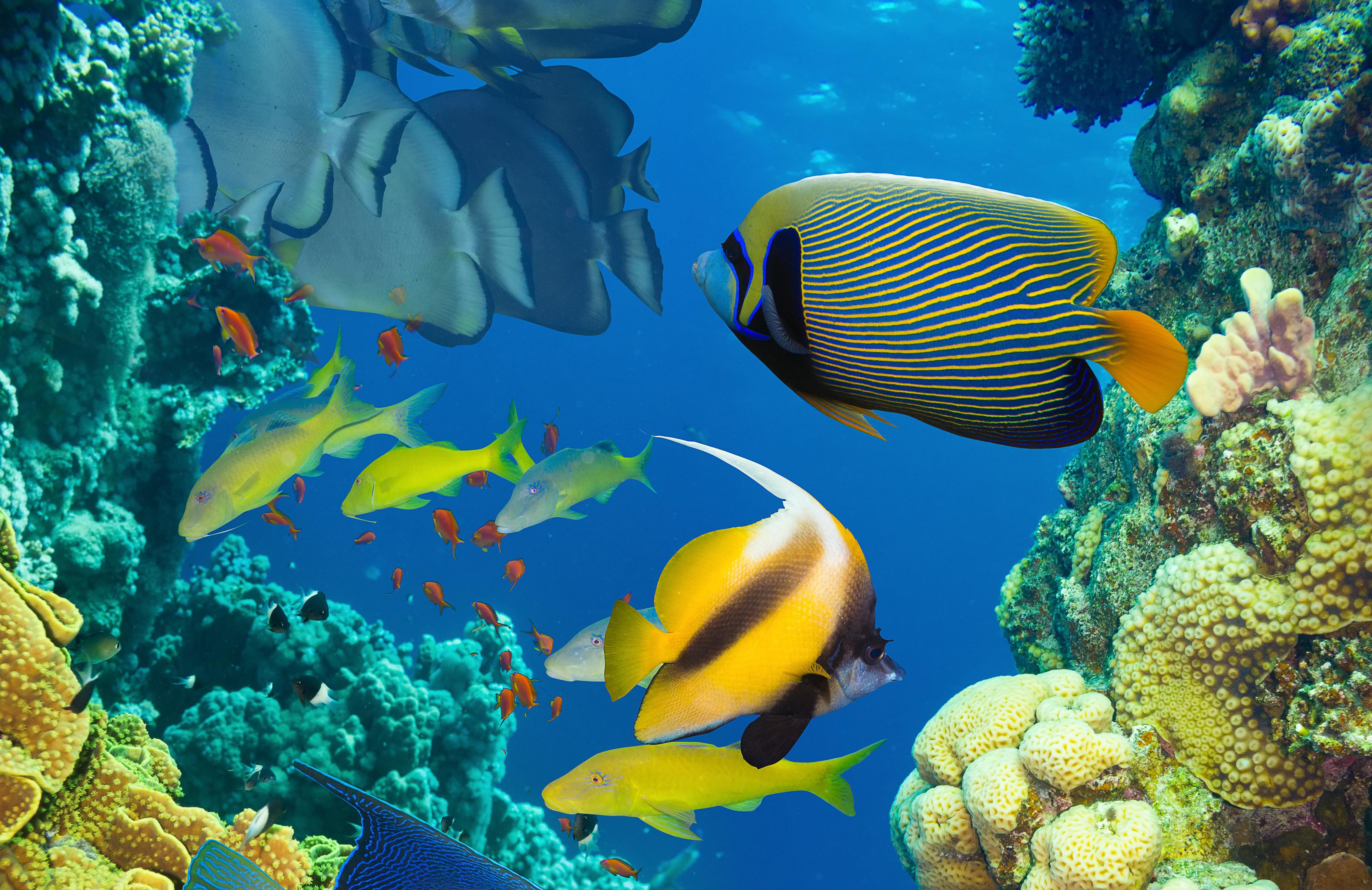 Fish 4k Ultra Hd Wallpaper Background Image 4012x2604 Id