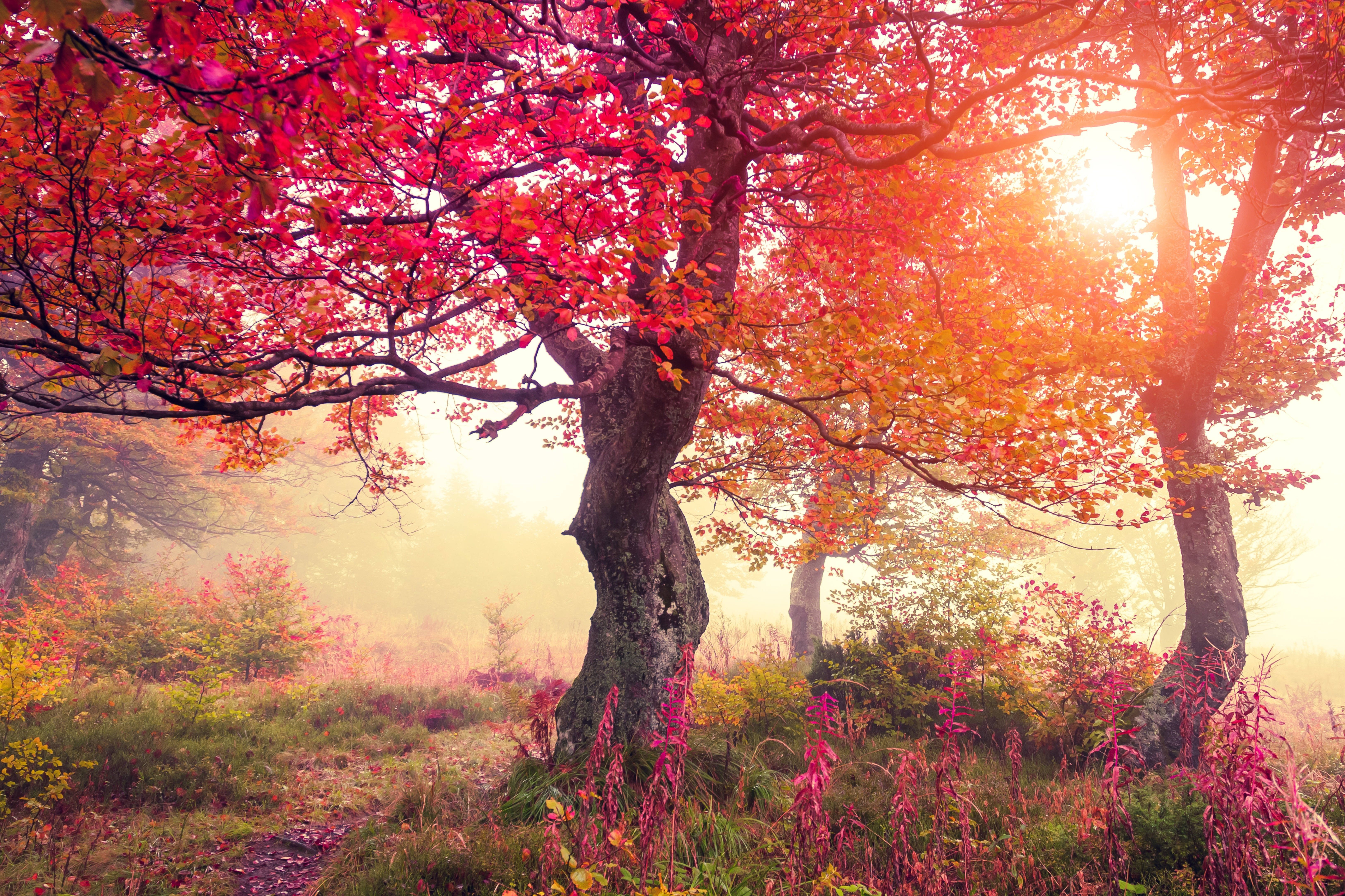 Herbst 5k Retina Ultra Hd Wallpaper Hintergrund 6500x4333 Id