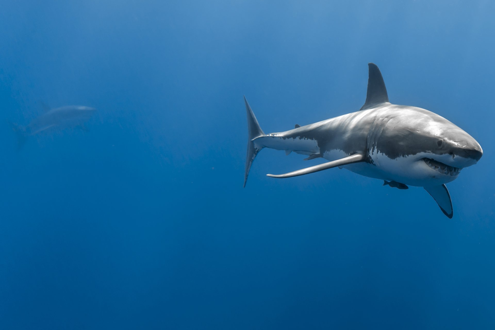 10+ 4K Ultra HD Shark Wallpapers | Background Images