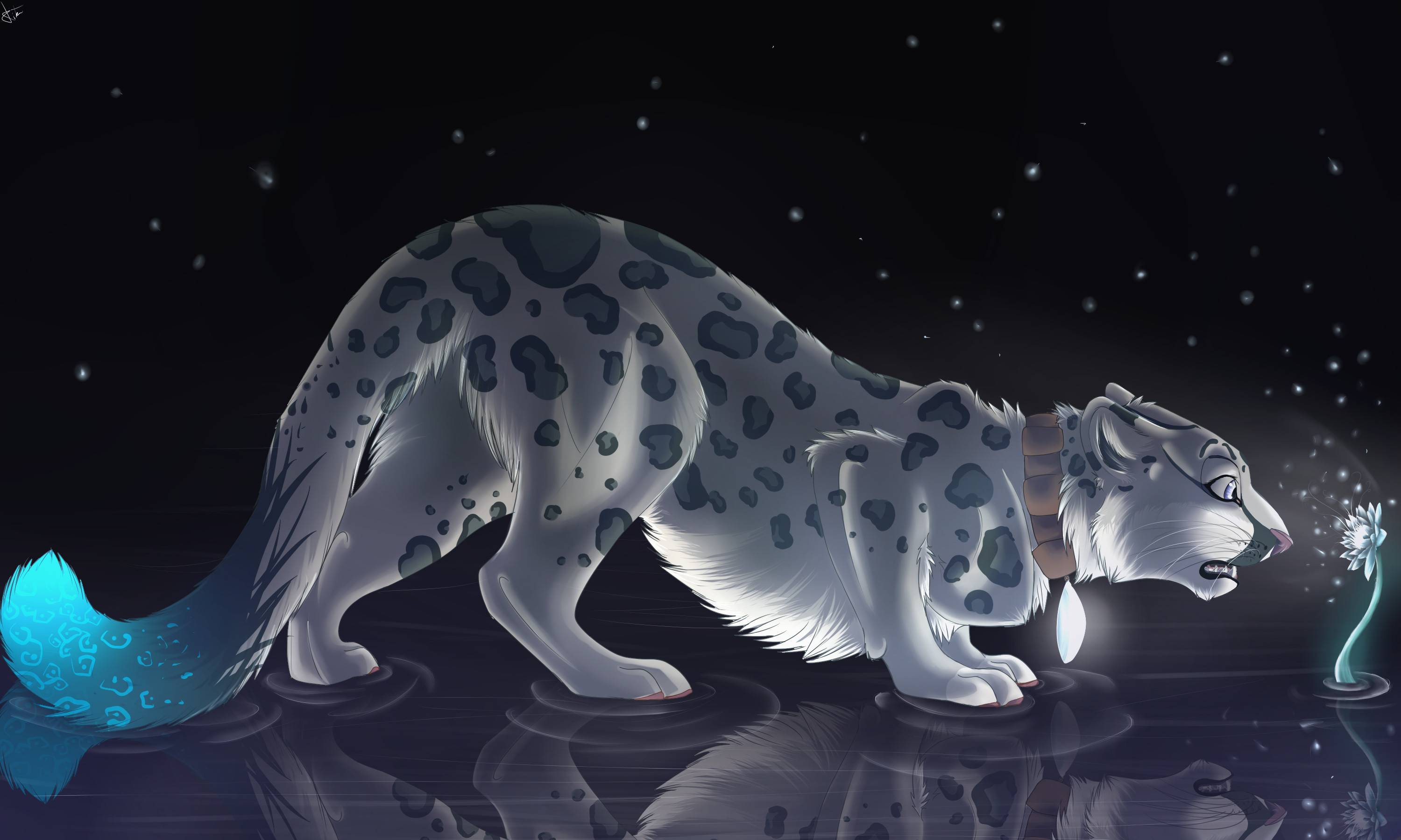 snow leopard full hd wallpaper and background 3000x1800