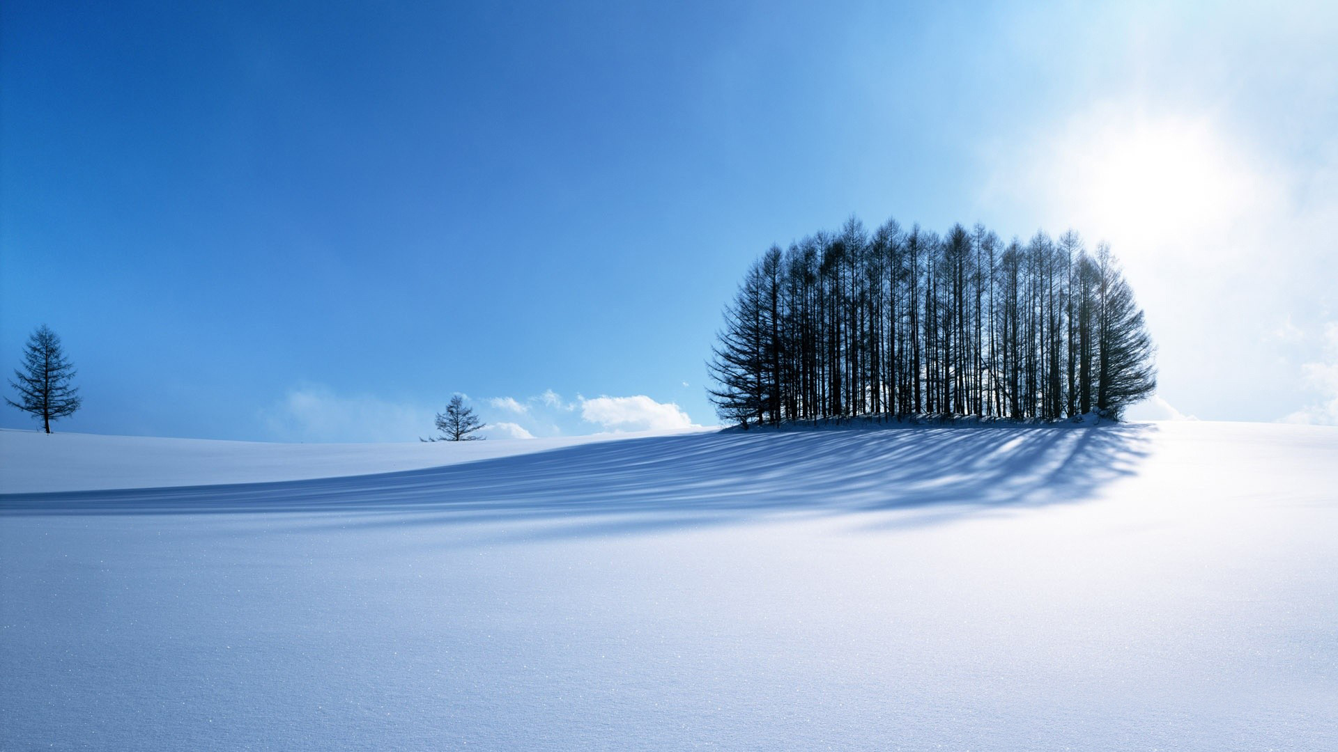 Sunny Winter Wallpaper Wide