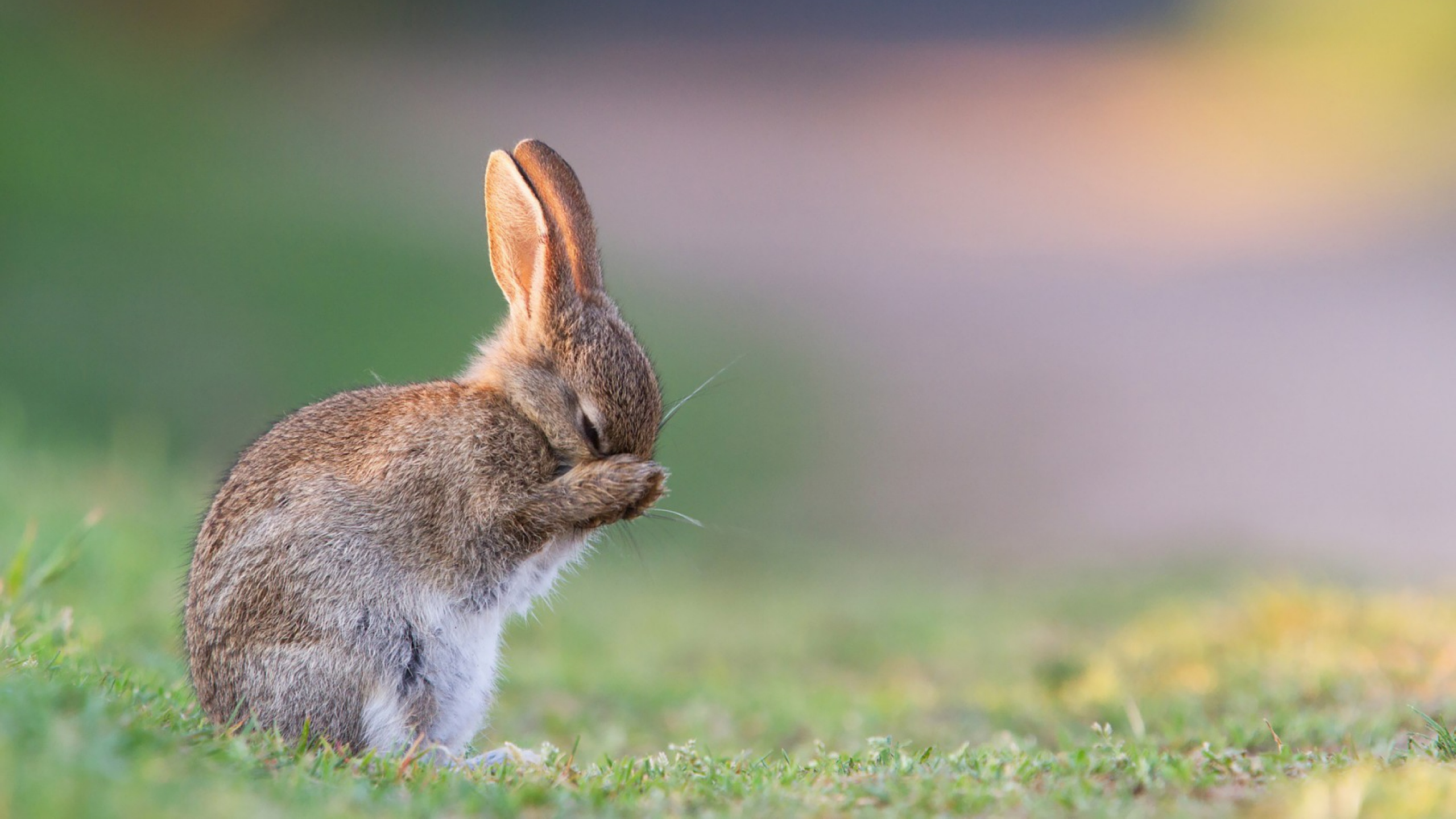 Cute Bunny HD Wallpapers 10 Download APK for Android