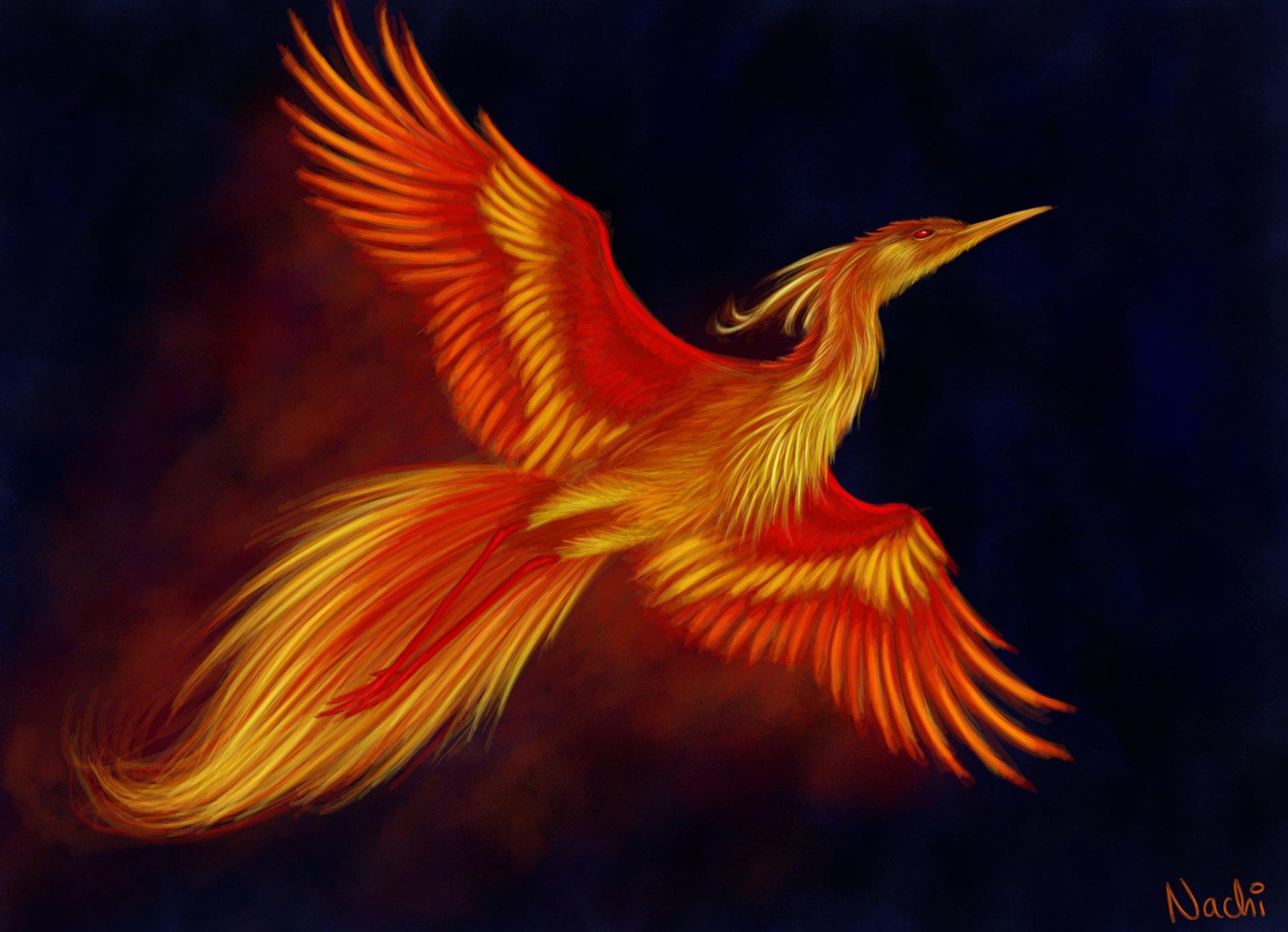 Firebird 5k retina ultra hd wallpaper background image 5845x4230 id 600284 wallpaper abyss - Fenix bird hd images ...