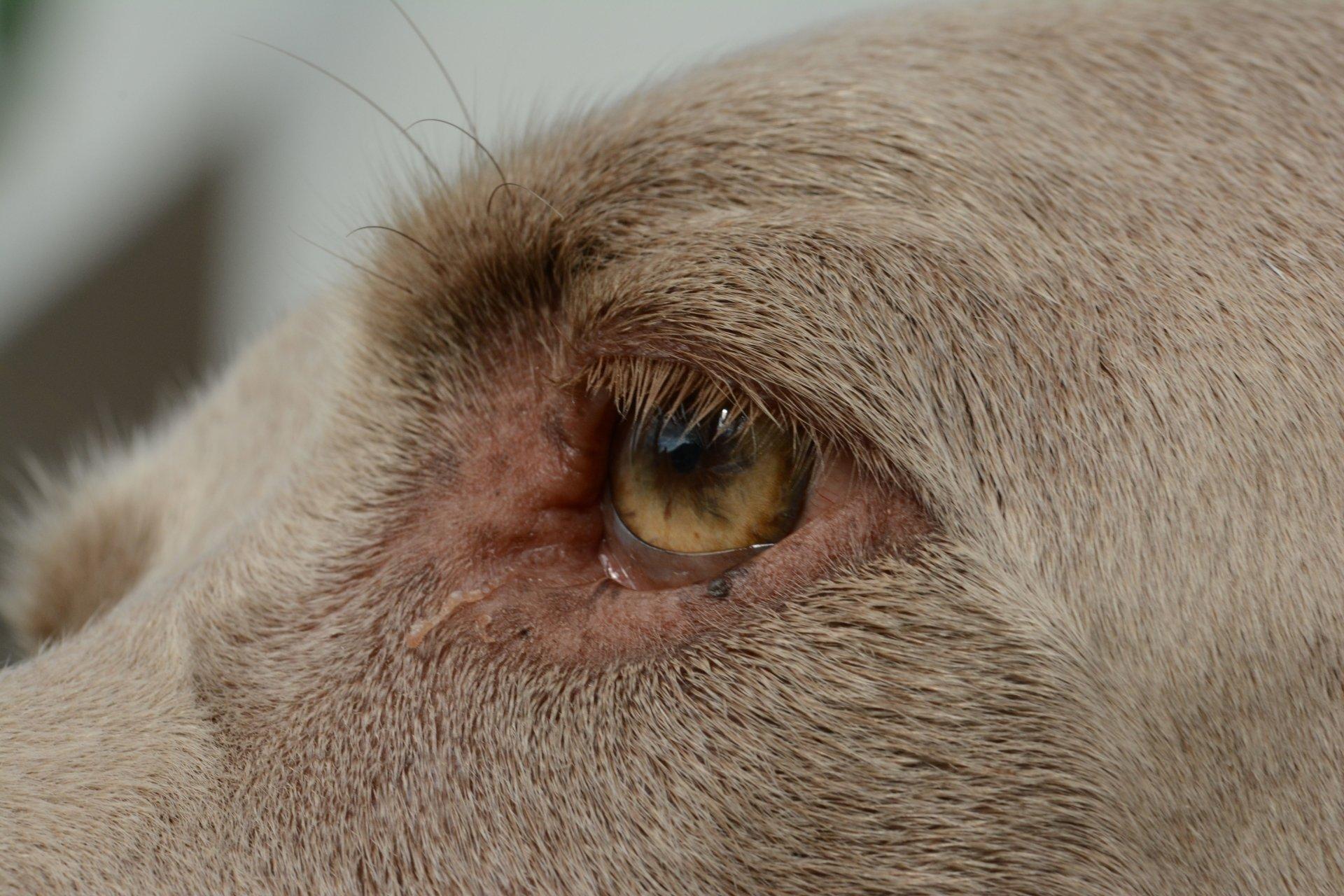 Animal - Eye  Wallpaper