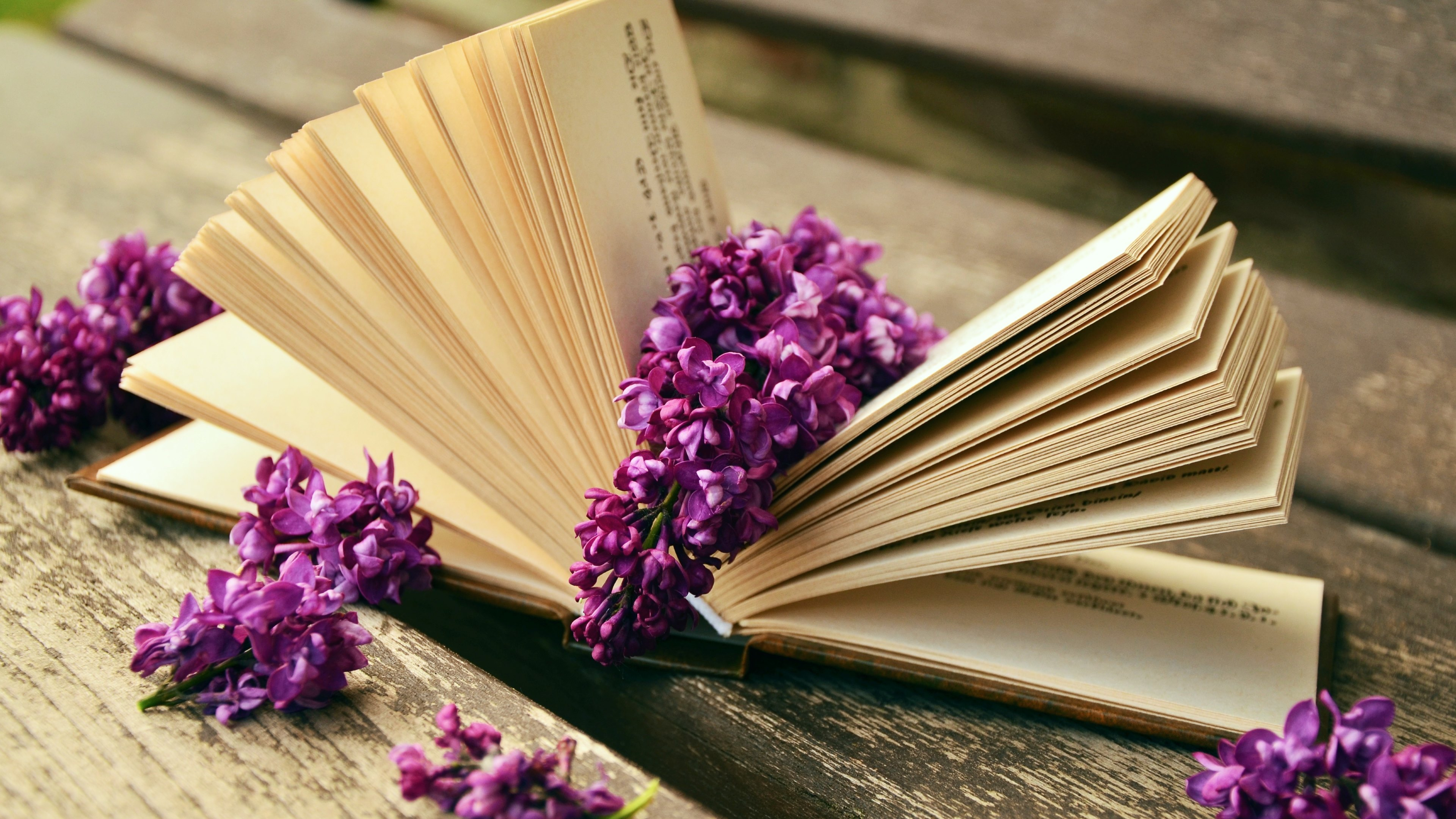 Lilac Flowers And A Good Book 4k Ultra Hd Wallpaper