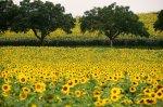 Preview Flower Fields