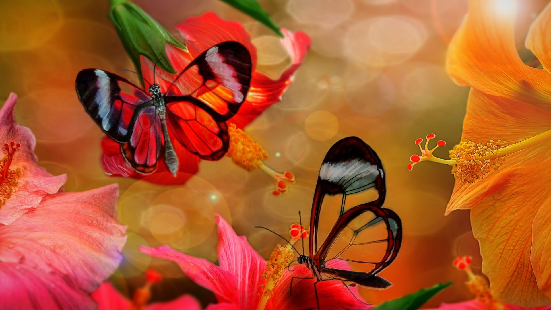 Wallpapers ID:673241