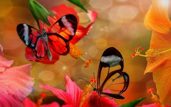 Animal Butterfly Flower Hibiscus Colorful HD Wallpaper   Background Image