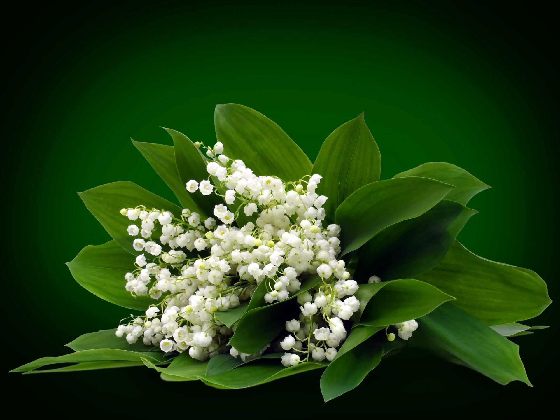 1 4k Ultra Hd Lily Of The Valley Wallpapers Background Images