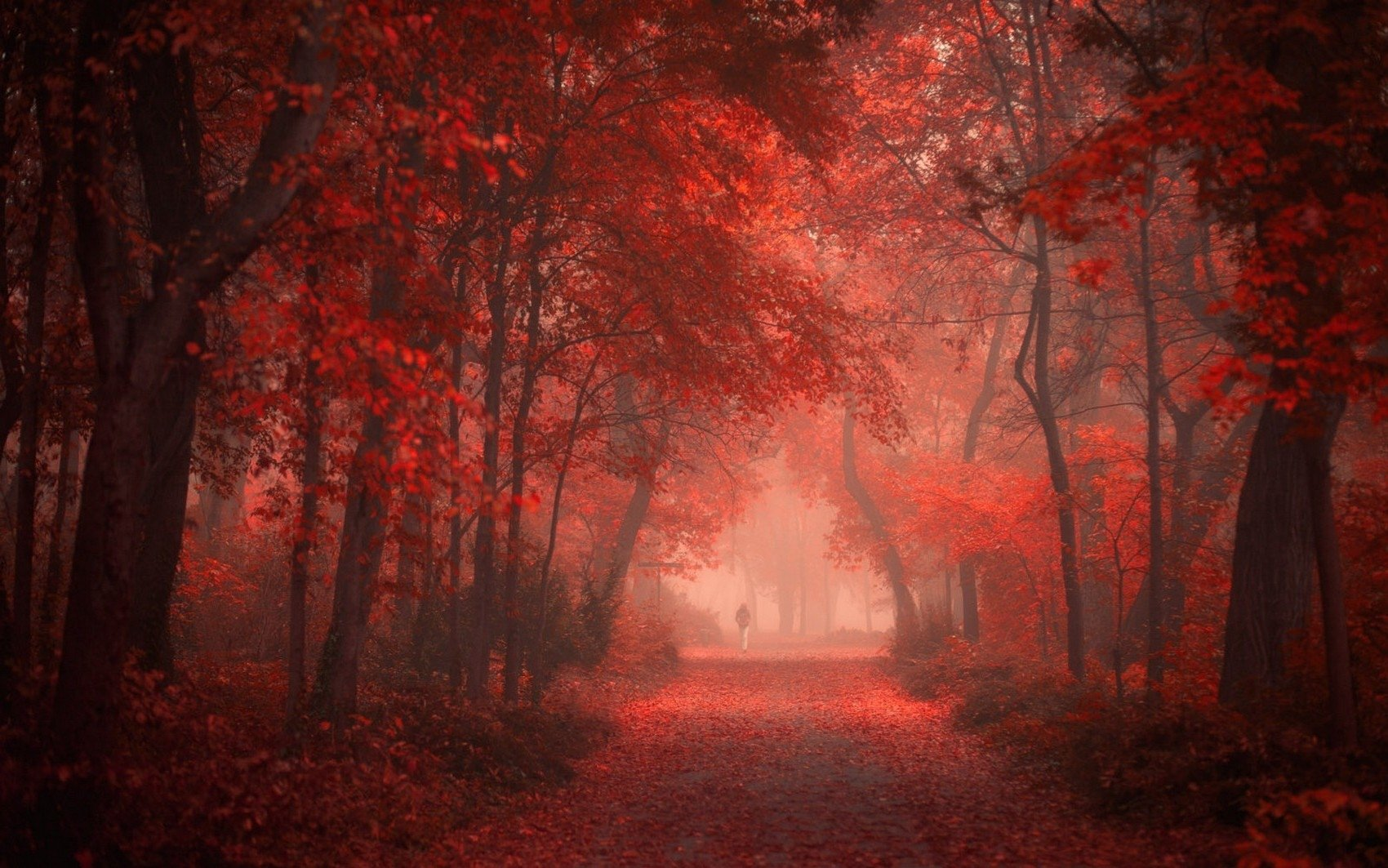 Forest Red Wallpapers ID676874