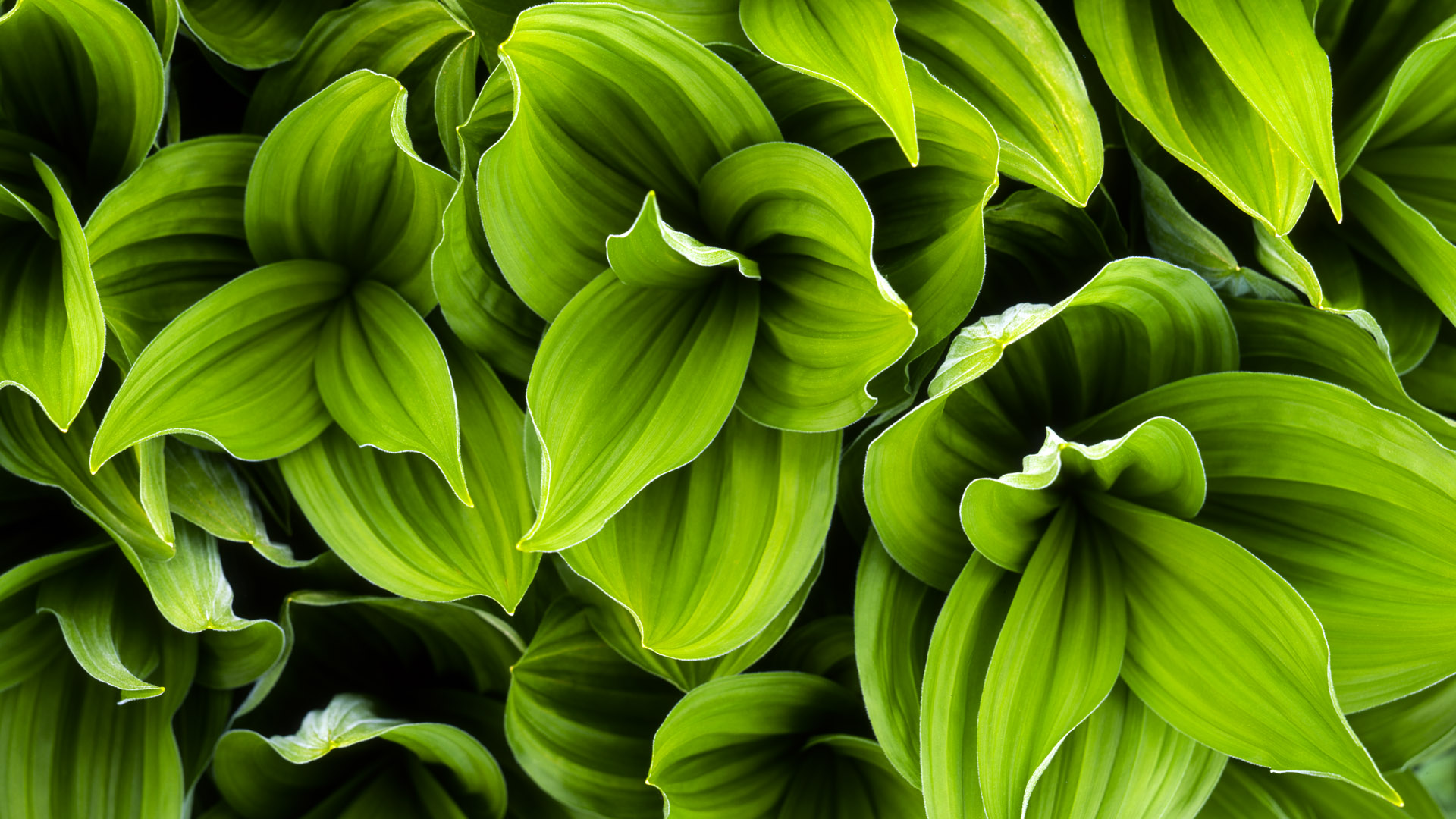 Green Plant Leaves HD Wallpaper | Background Image ...