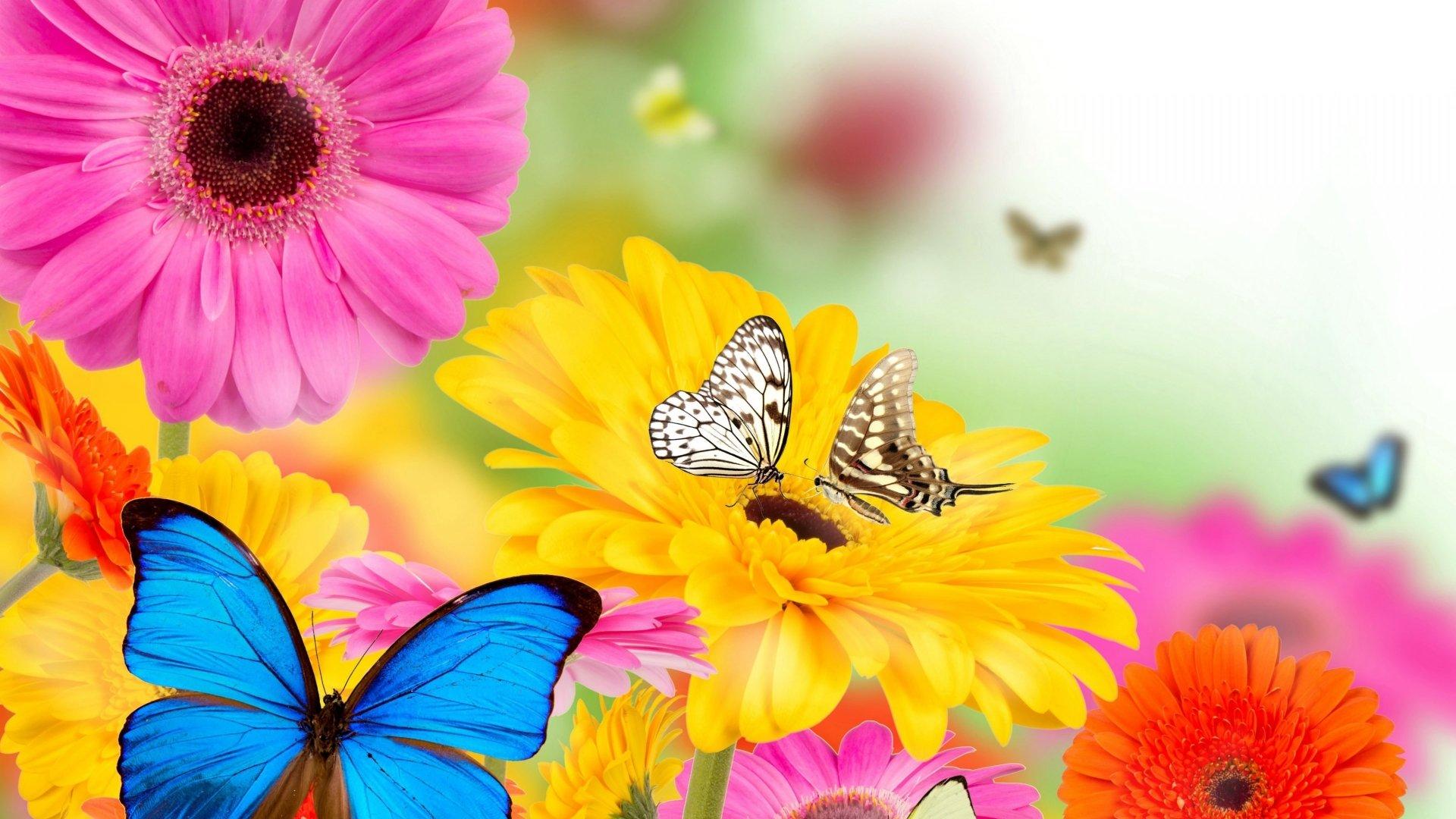 Artistic - Collage  Artistic Spring Butterfly Blue Flower Gerbera Yellow Flower Pink Flower Wallpaper
