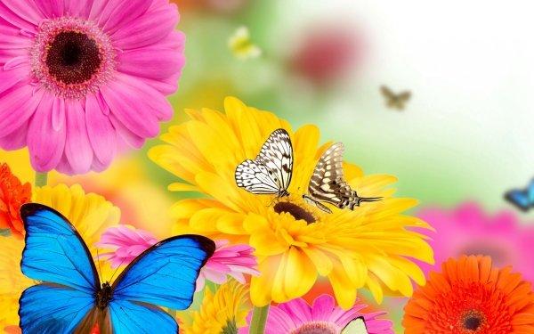 Artistique Collage Printemps Papillon Bleu Fleur Gerbera Pink Flower Yellow Flower Fond d'écran HD | Image