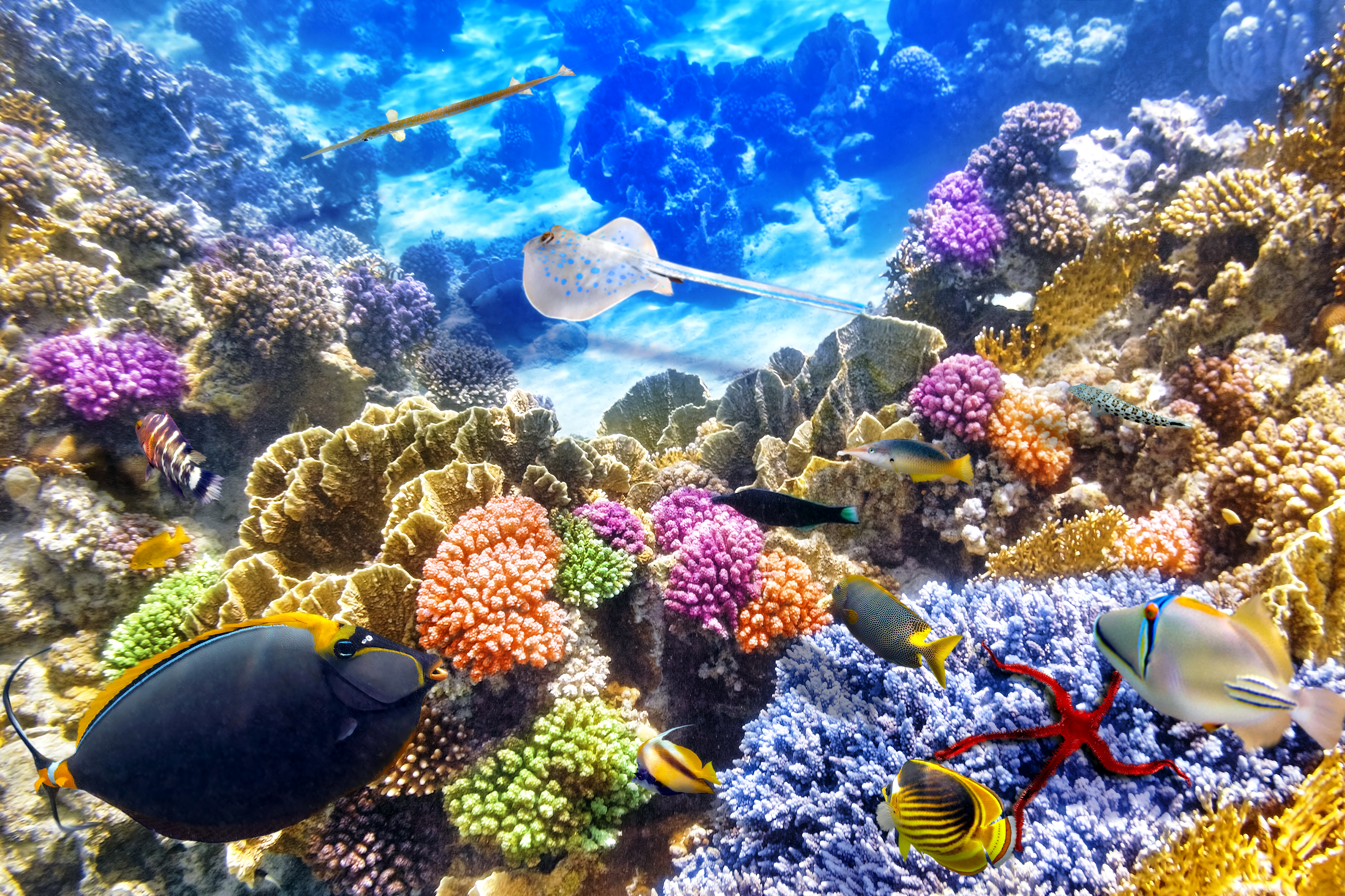 Under The Sea 5k Retina Ultra HD Wallpaper And Background Image