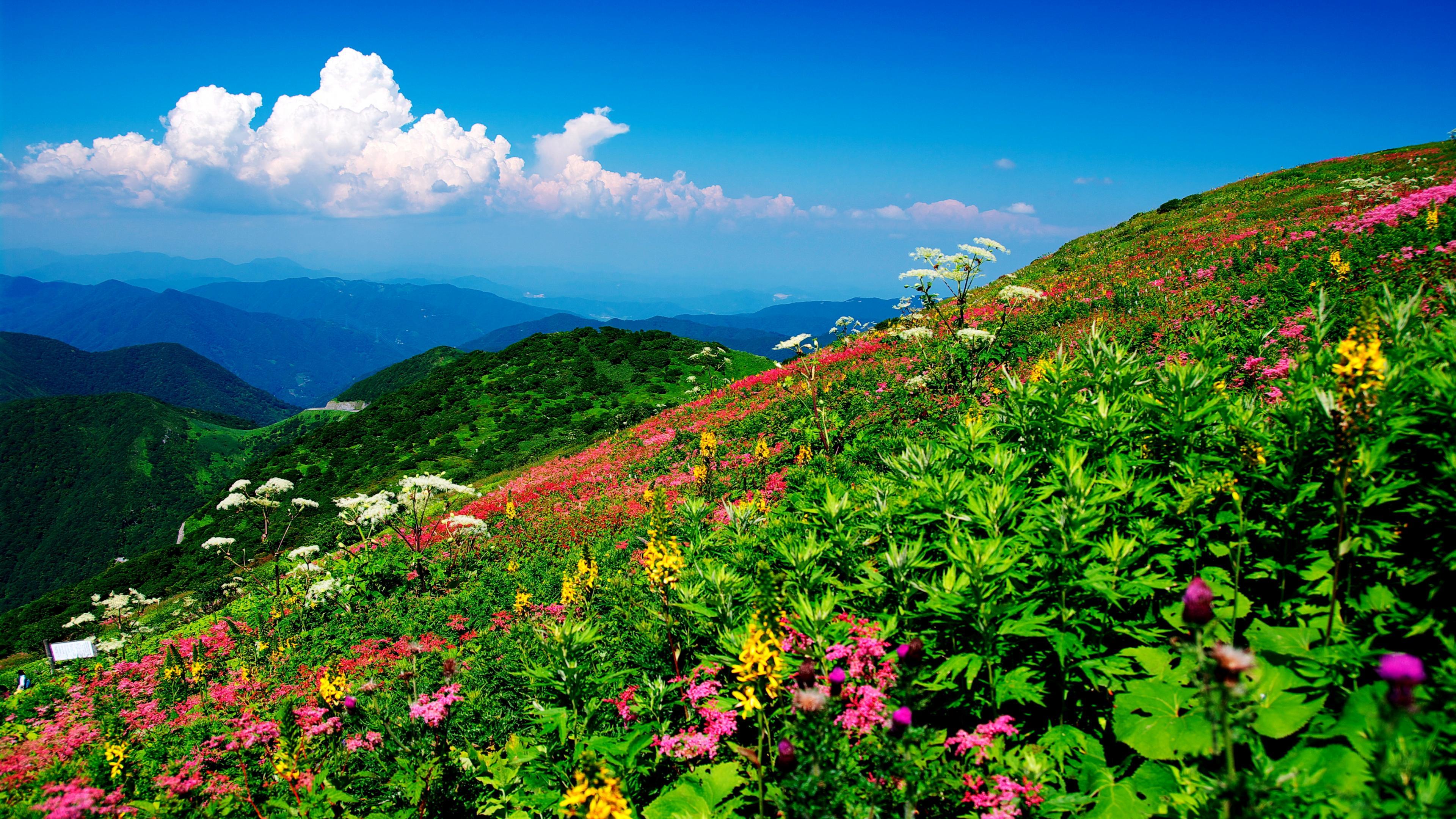 Flowers On The Mountainside 4k Ultra Hd Duvar Kağıdı Arka Plan