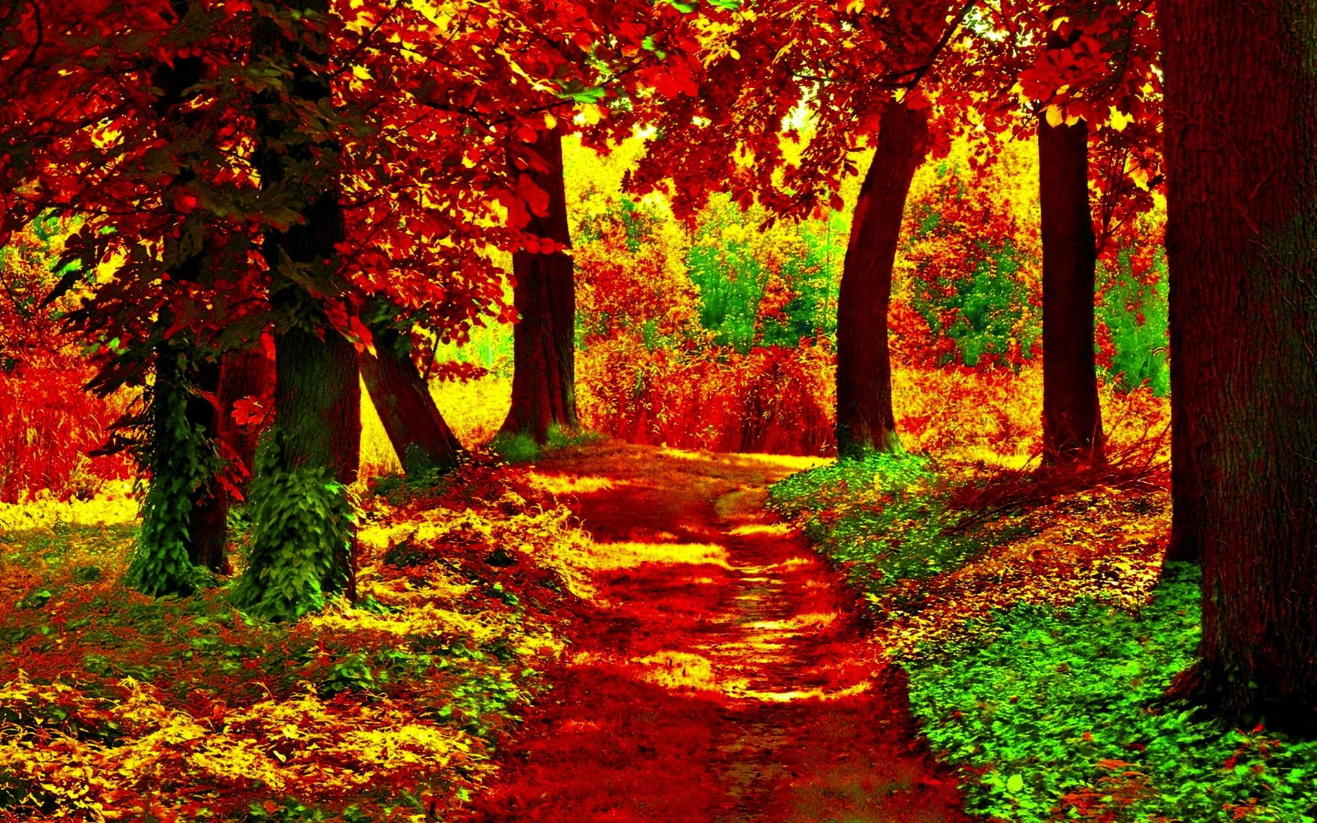 Full Screen Backgrounds Beautiful Photo: Path In Autumn Forest Full HD Wallpaper And Background