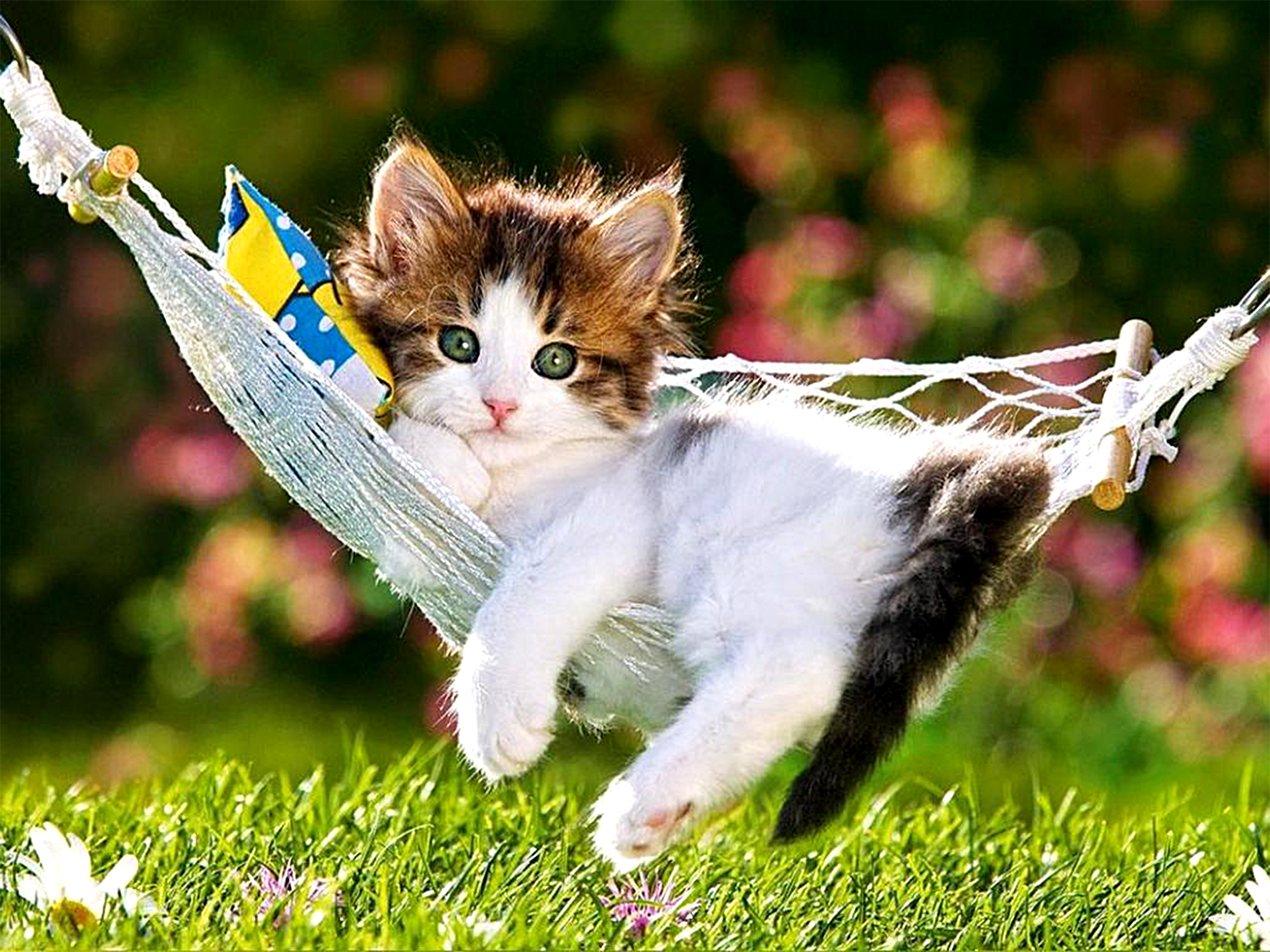 Adorable kitten in hammock full hd wallpaper and background image animal cat animal grass hammock cute kitten wallpaper altavistaventures Choice Image
