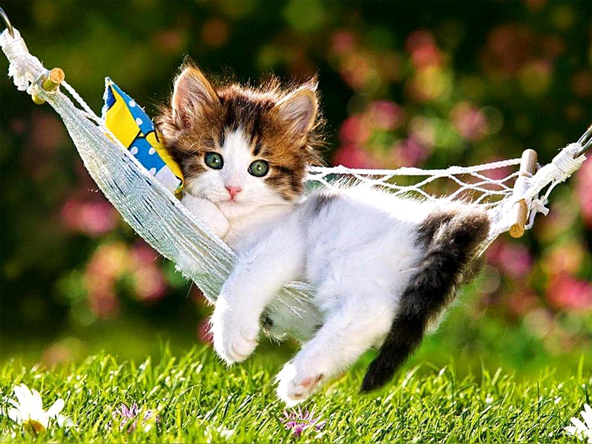 Animal - Cat  Animal Grass Hammock Cute Kitten Wallpaper