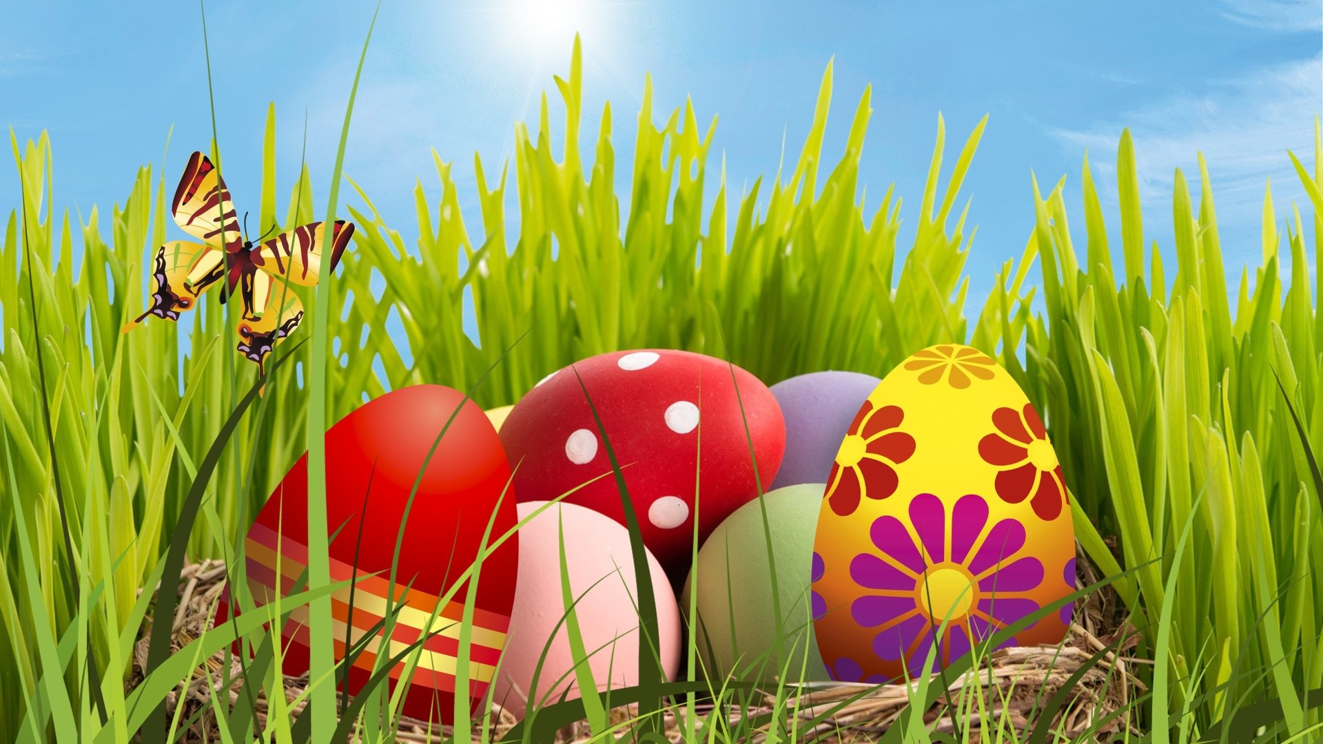 Holiday - Easter  Holiday Egg Easter Egg Colors Colorful Grass Green Butterfly Close-Up Wallpaper