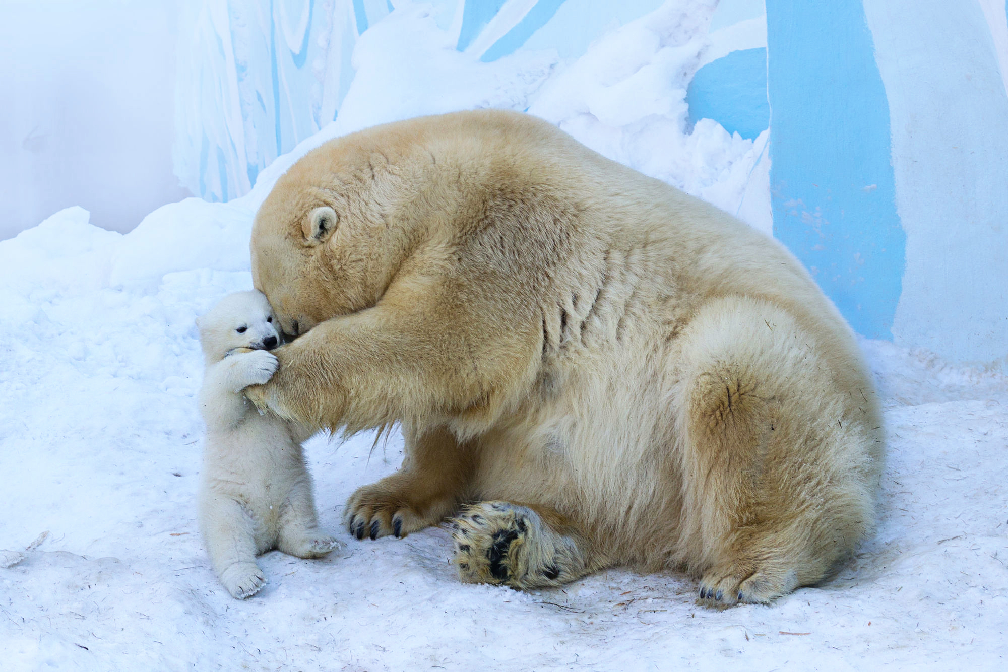 393 polar bear hd wallpapers | background images - wallpaper abyss