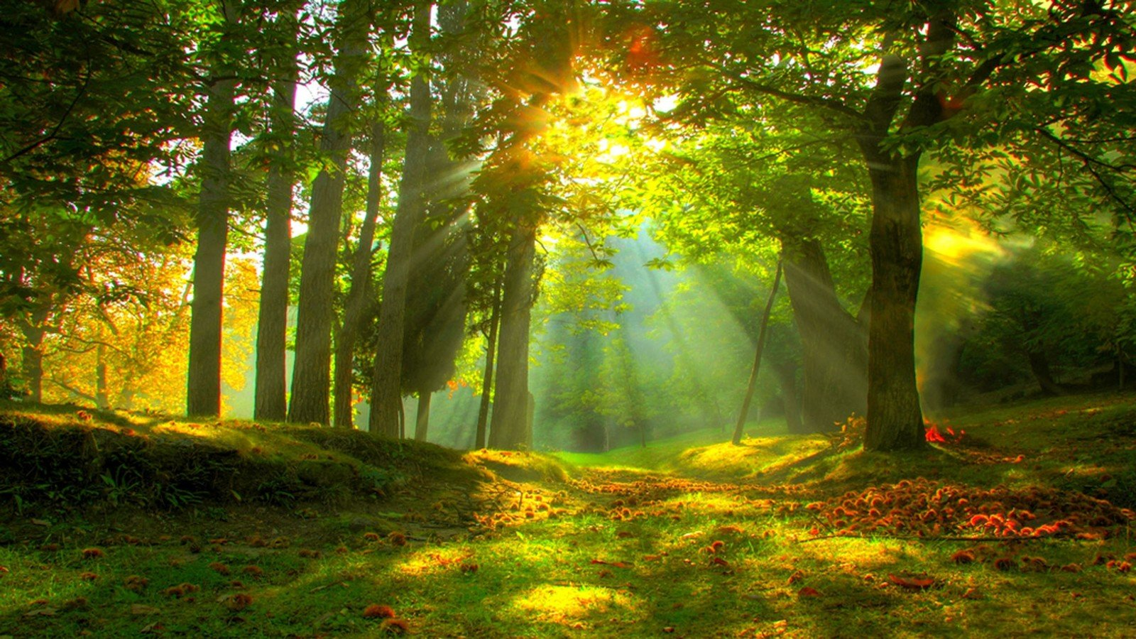 Earth - Forest  Sunlight Sunshine Earth Sunbeam Sun Tree Fall Wallpaper