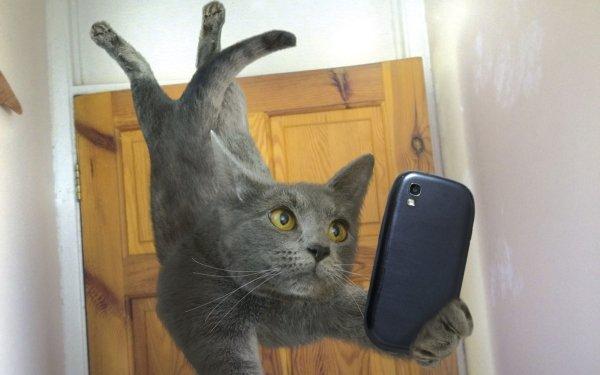 Humor Cat Cats Selfie Smartphone HD Wallpaper | Background Image