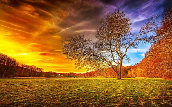 Earth Field Tree Sunset Sky Golden HDR HD Wallpaper | Background Image