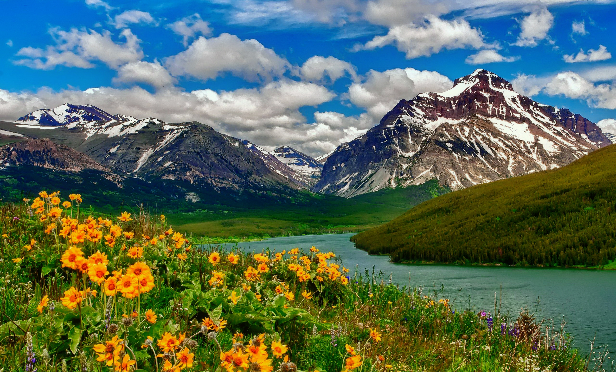 Mountain Flowers By The Lake HD Wallpaper
