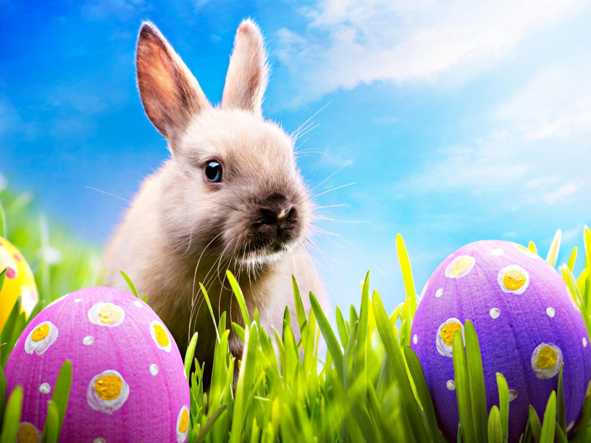 Holiday - Easter  Bunny Egg Rabbit Wallpaper