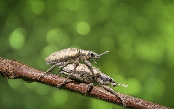 Animal Beetle Bug Insect Green Bokeh Close-Up Weevil HD Wallpaper | Background Image