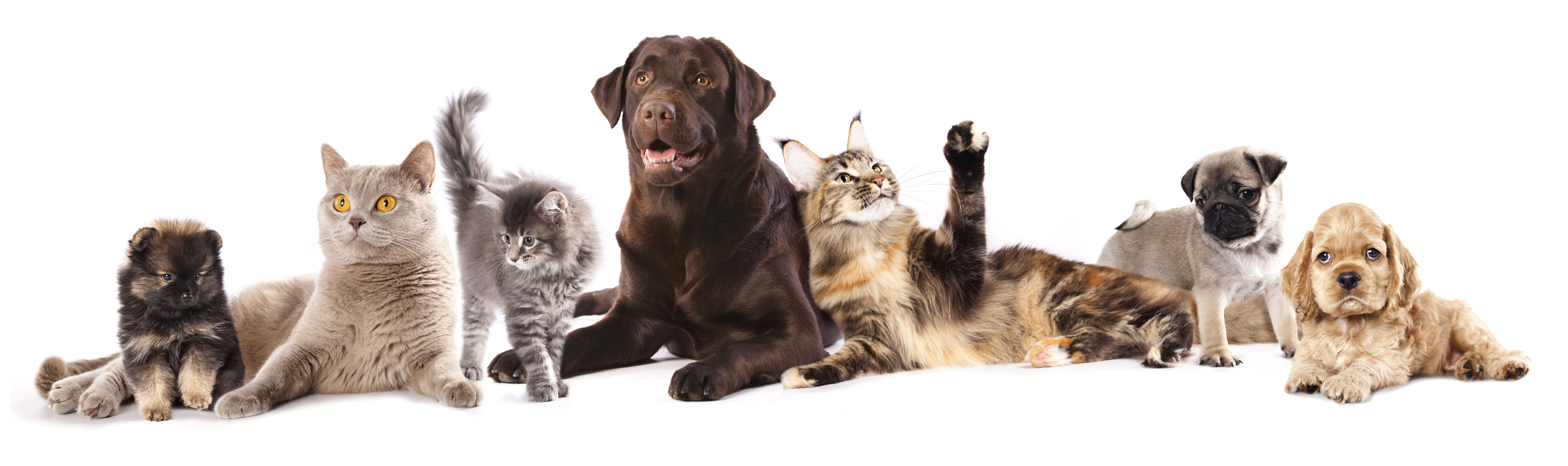 cats and dogs Full HD Wallpaper and Background Image  6729x2000  ID:690832