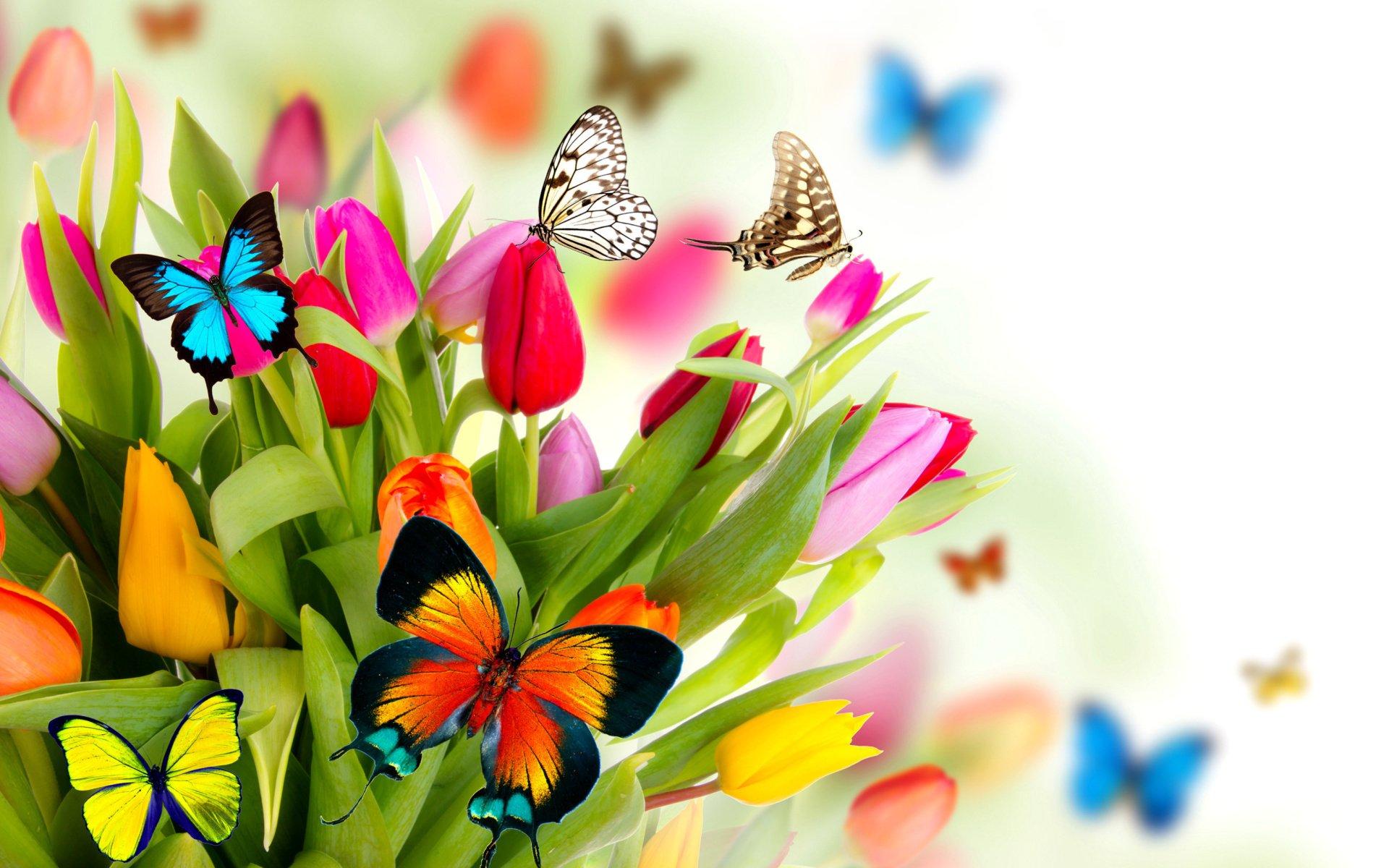 Fondos De Primavera Mariposas