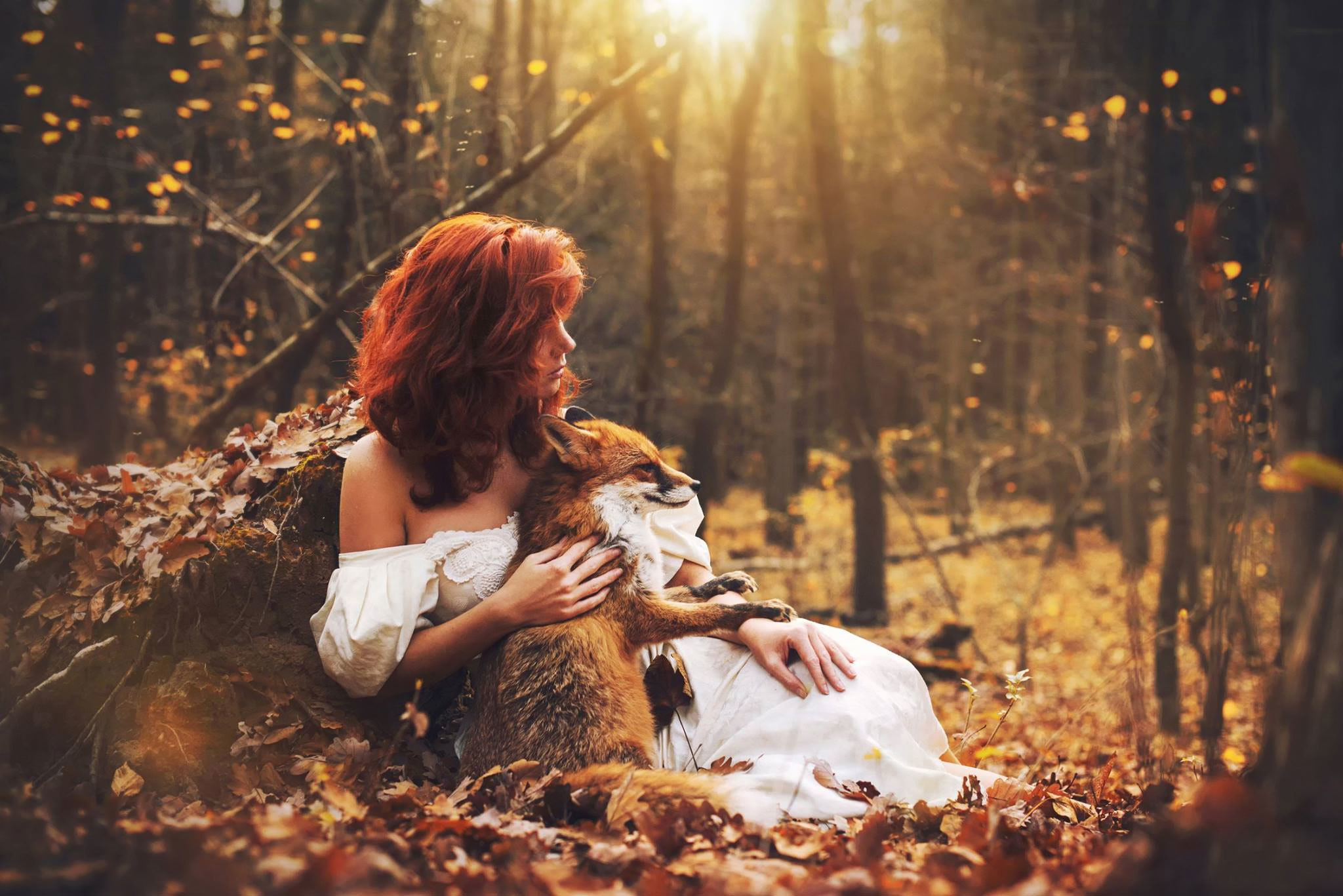 Fall In Love Girl Wallpaper : Girl and A Fox Full HD Wallpaper and Background Image 2048x1367 ID:692532