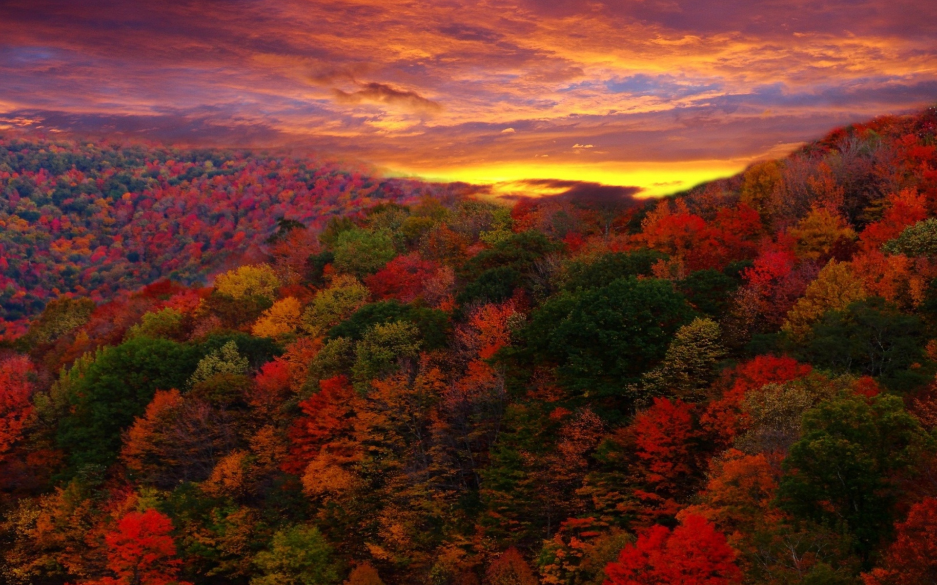 Sunset Over Autumn Forest Landscape Full HD Wallpaper And Background