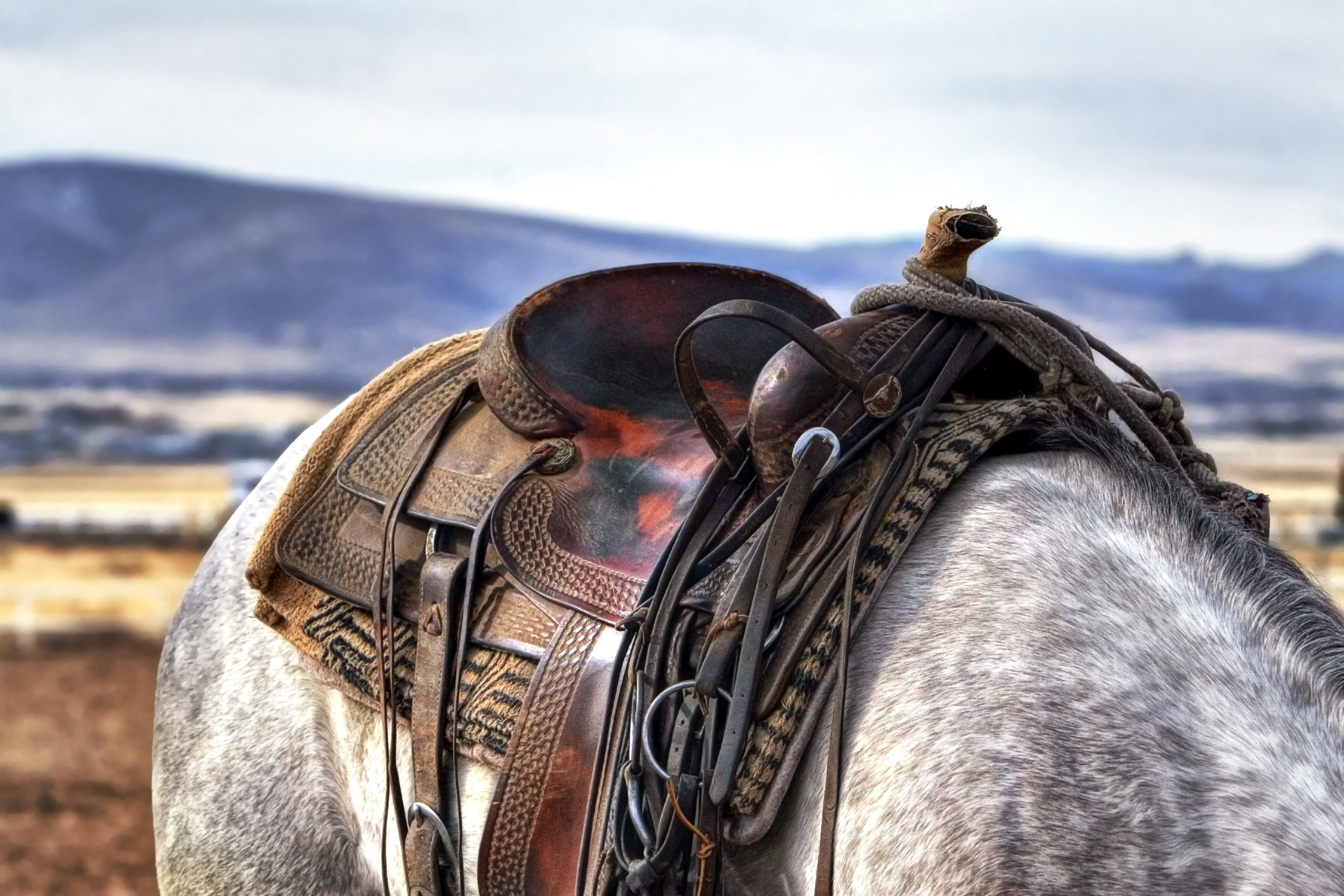 Cowboys western saddle on a horse Full HD Wallpaper and ...