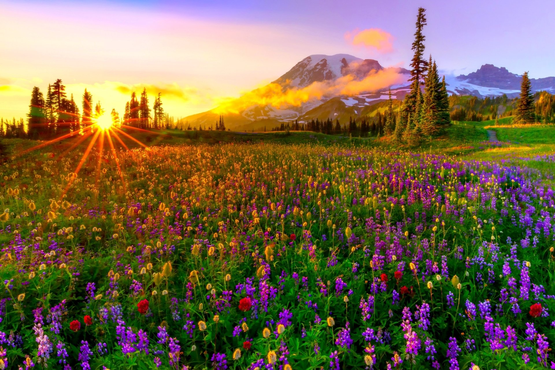 Earth - Spring  Earth Wildflower Landscape Mountain Flower Meadow Field Colorful Sunset Wallpaper