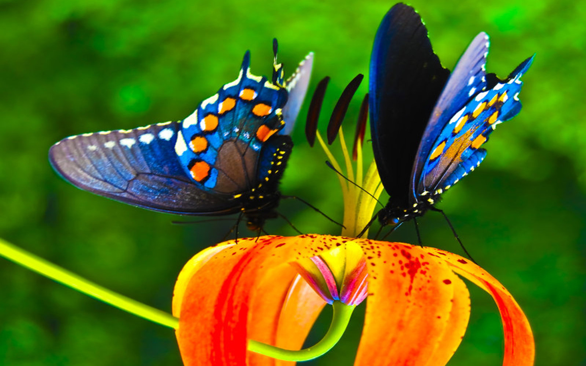 download wallpaper multicolored butterflies - photo #17