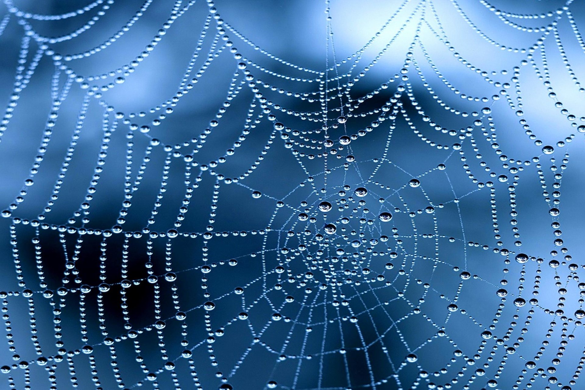 Morning Dew on Spider Web HD Wallpaper | Background Image ...